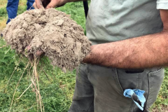 Soil Health in Sussex County